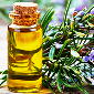 Rosemary oil manufacturers